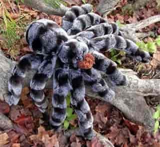 spider22